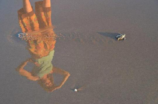Baby sea turtle release in El Salvador