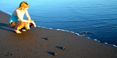 Shel with sea turtles